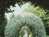 Entrada dos noivos na Quinta da Quintã - Quinta da Quintã