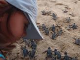 Soltura de filhotes de tartarugas marinhas em Fernando de Noronha - Aina Turismo