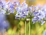 Flores no Jardim - Quinta do Jordão