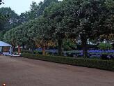 Avenida das Tílias - Quinta do Jordão