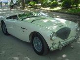 Austin Healey 100/4 de 1955 - na Quinta dos Curvos - TXR Carros Antigos