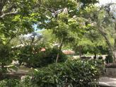 Relvado exterior - Quinta da Cerca
