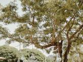 Arvores - Quinta da Valinha